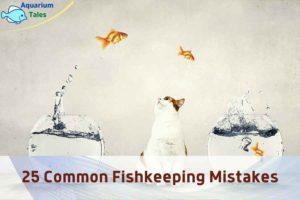 Fish Tank Problems by Aquarium Tales