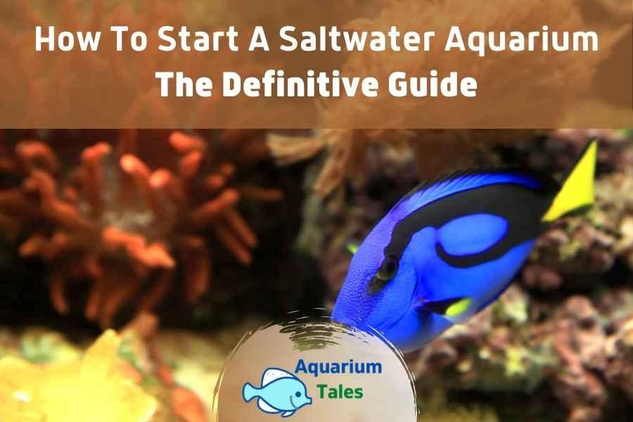 How to Start a Saltwater Aquarium by Aquarium Tales