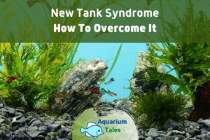 New Tank Syndrome by Aquarium Tales