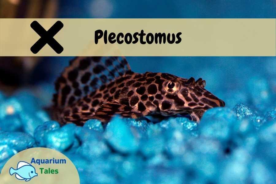 Plecostomus - Beginners Should Avoid