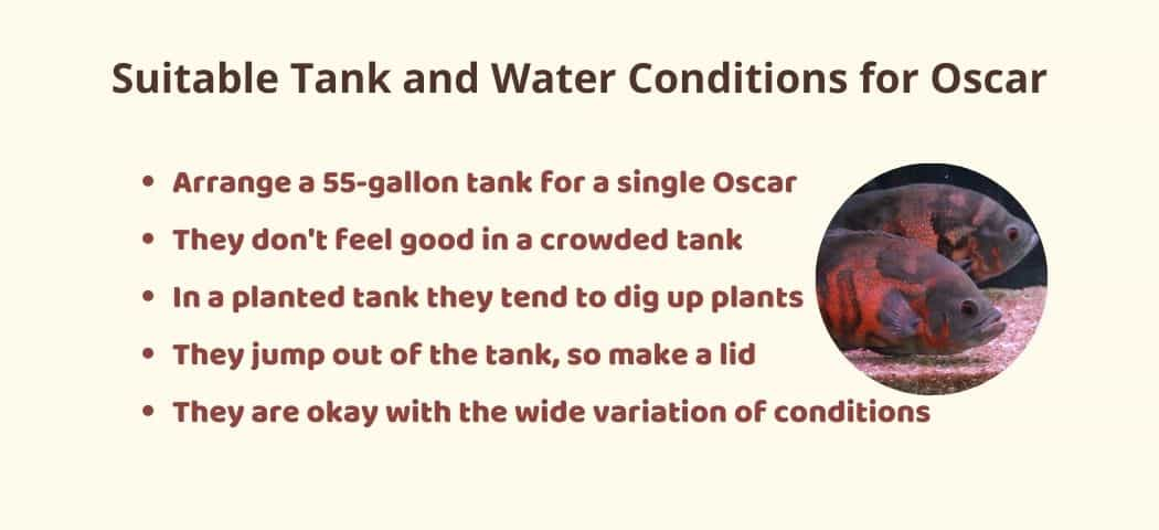 Suitable Tank and Water Conditions for Oscar