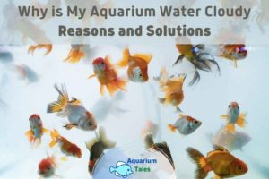 Why is My Aquarium Water Cloudy by Aquarium Tales