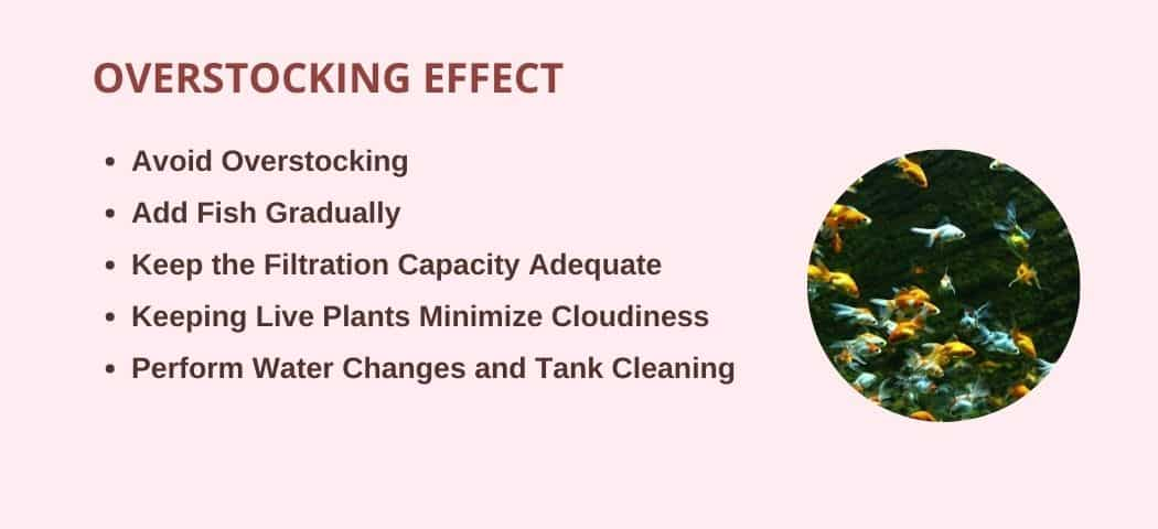 cloudy fish tank for overstocking effect