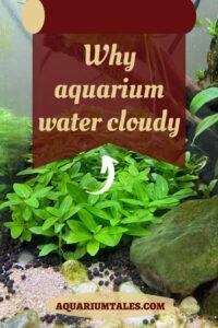 why is my fish tank cloudy - aquarium tales