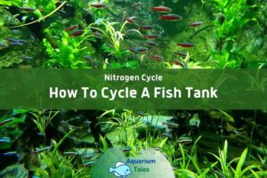 How To Cycle A Fish Tank by Aquarium Tales