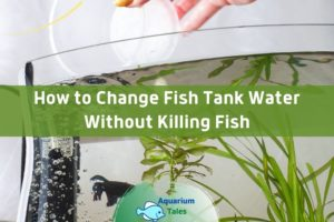 How to Change Fish Tank Water Without Killing Fish by Aquarium Tales