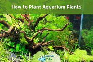 How to Plant Aquarium Plants by Aquarium Tales