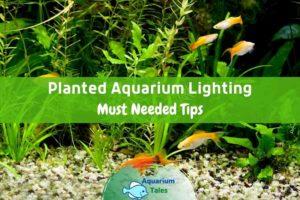 Planted Aquarium Lighting Guide by Aquarium Tales