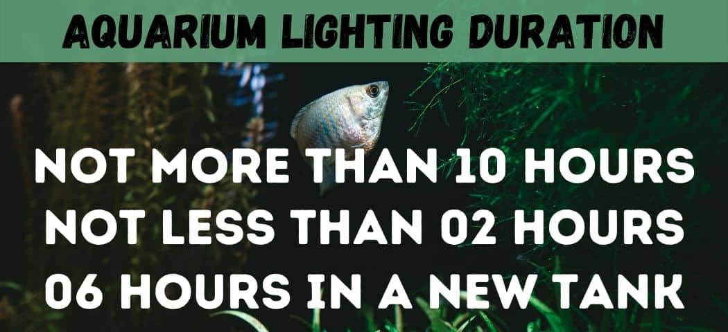 aquarium Lighting Duration