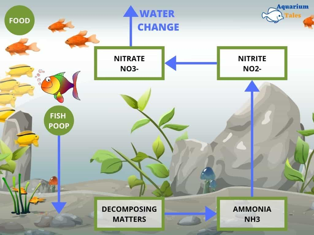 nitrogen cycle in fish tanks