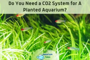 Do You Need a CO2 System for A Planted Aquarium by Aquarium Tales