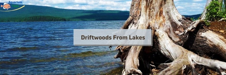 Driftwoods From Lakes