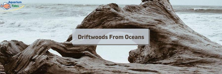 Driftwoods From Oceans