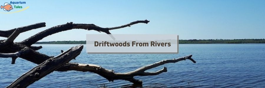 Driftwoods From Rivers
