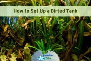 How to Set Up a Dirted Tank by Aquarium Tales