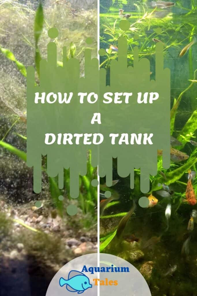 How to set up a dirted tank