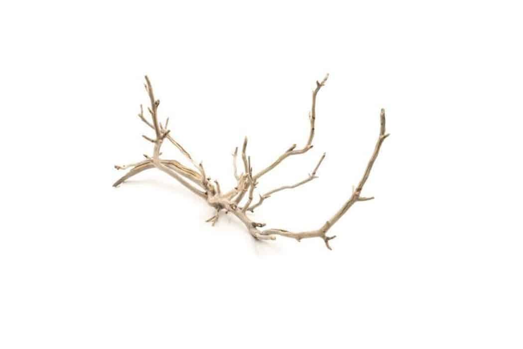 Manzanita Driftwood