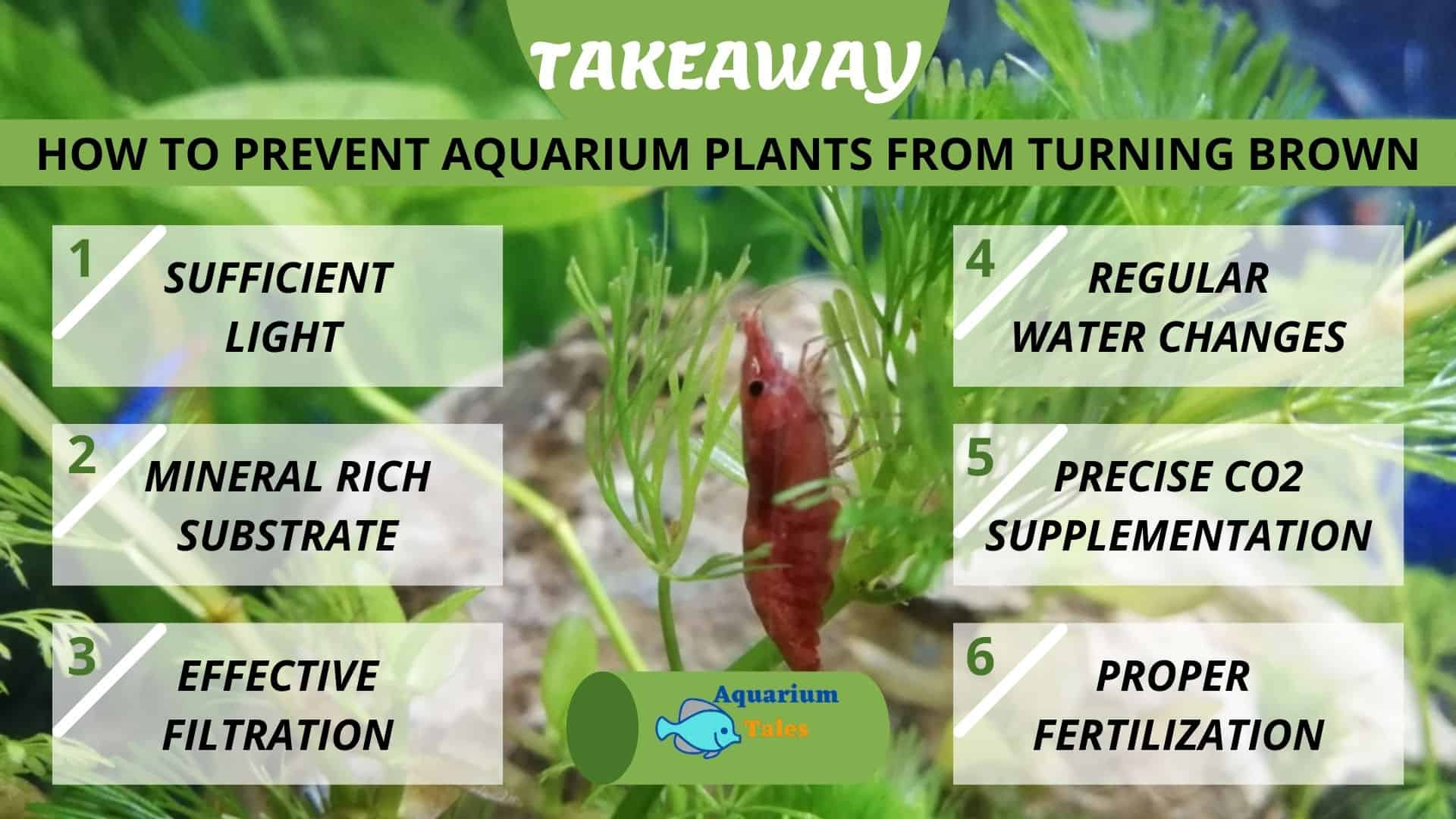 how to prevent aquarium plants from turning brown - takeaway