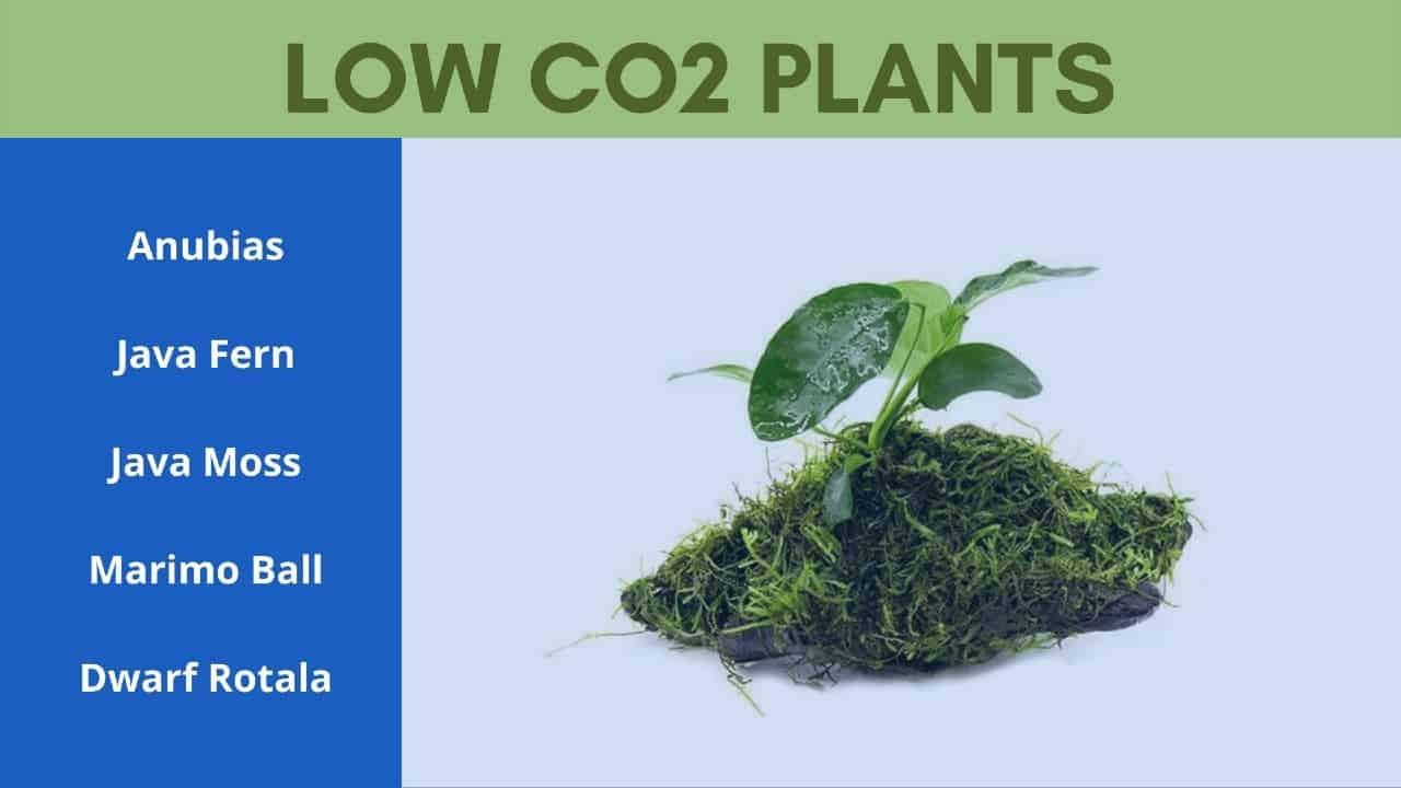 low co2 plants