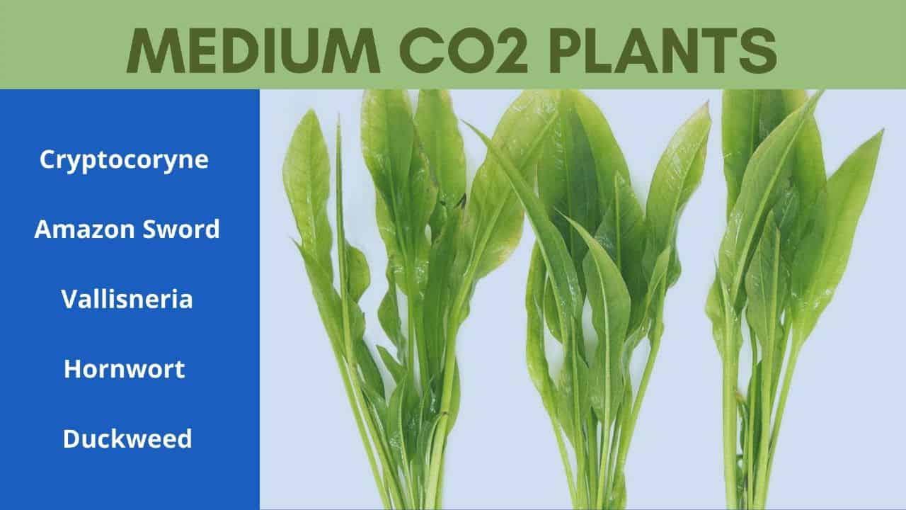 medium co2 plants