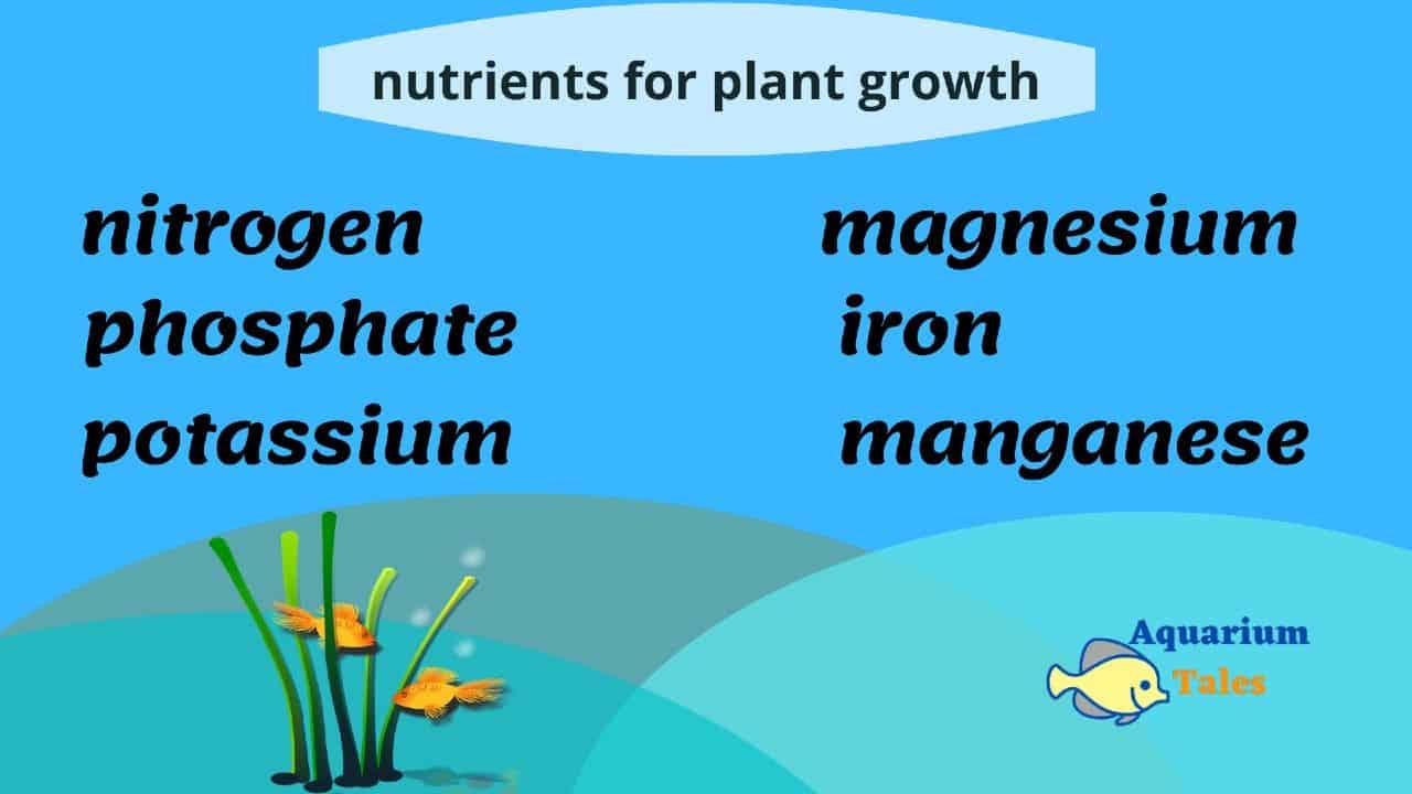 nutrients for aquarium plants