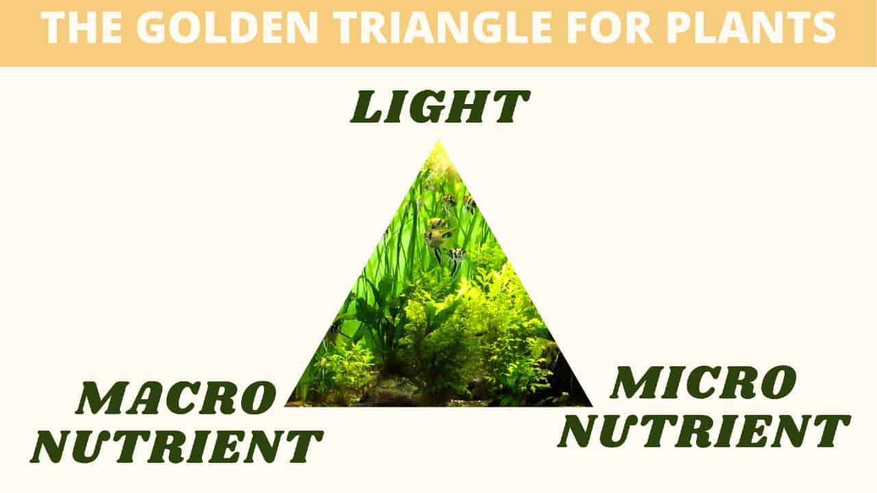 the golden triangle for plants