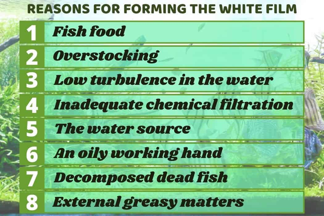 8 reasons for forming white film on top of aquarium water