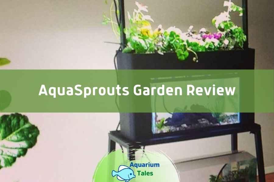 AquaSprouts Garden Review by Aquarium Tales