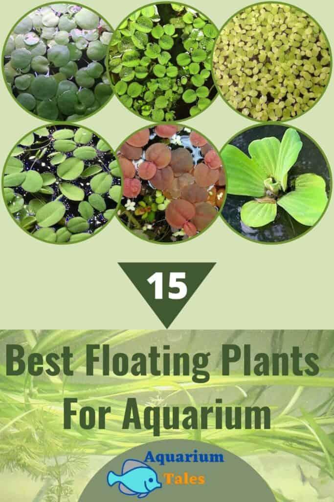 Best Floating Plants for Aquarium 15