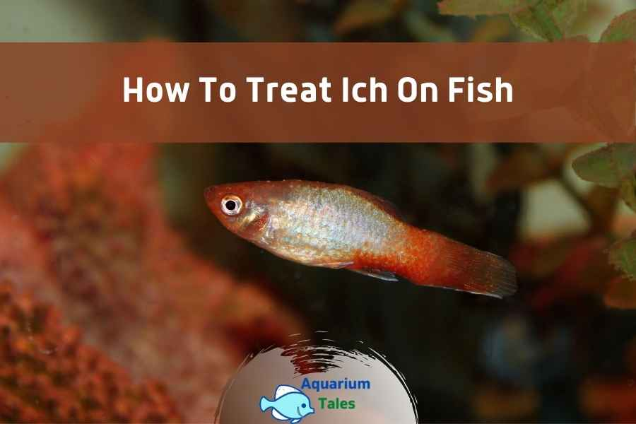 How to Treat Ich on Fish by Aquarium Tales