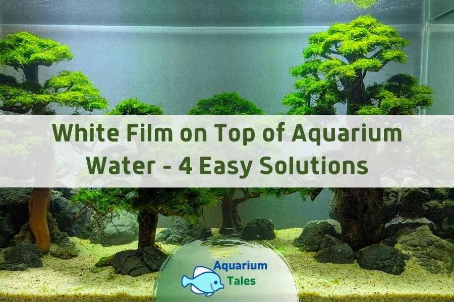 White Film on Top of Aquarium Water by Aquarium Tales