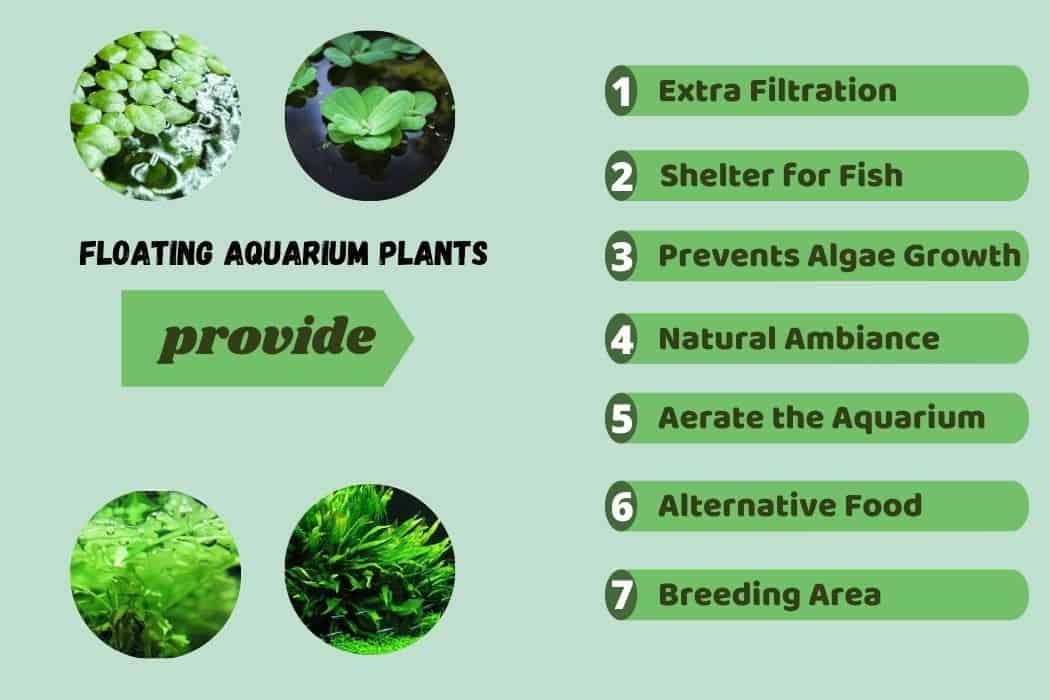 benefits of floating aquarium plants
