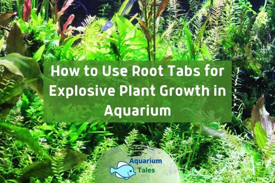 How to Use Root Tabs by Aquarium Tales