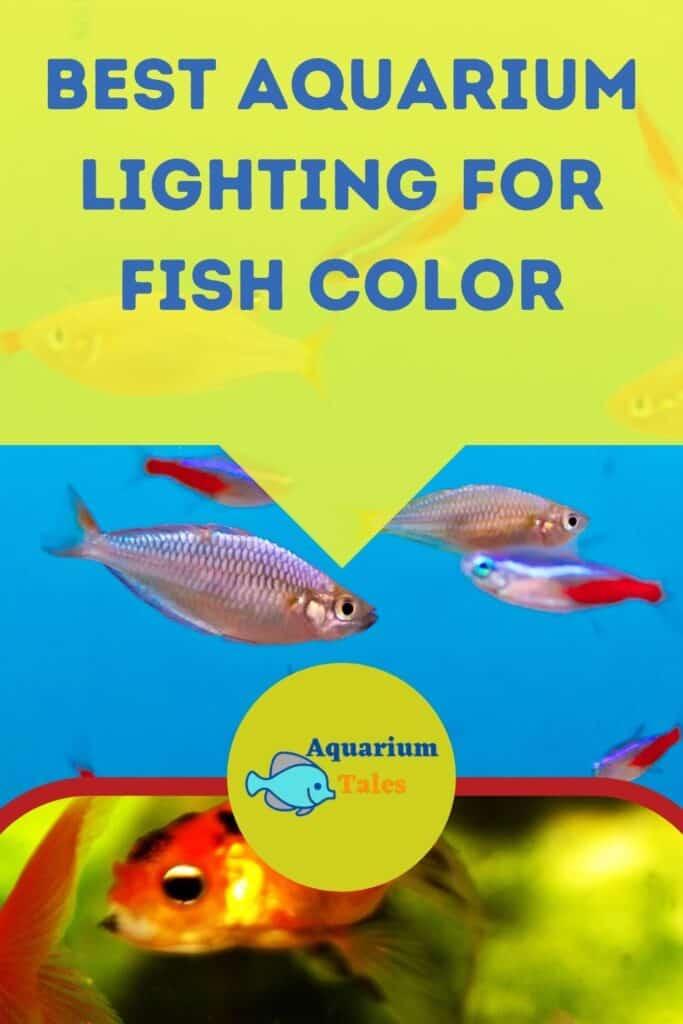 Best Aquarium Lighting For Fish Color