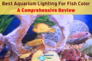 Best Aquarium Lighting For Fish Color by Aquarium Tales