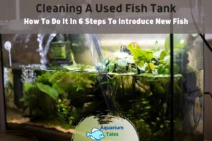 Cleaning A Used Fish Tank by Aquarium Tales