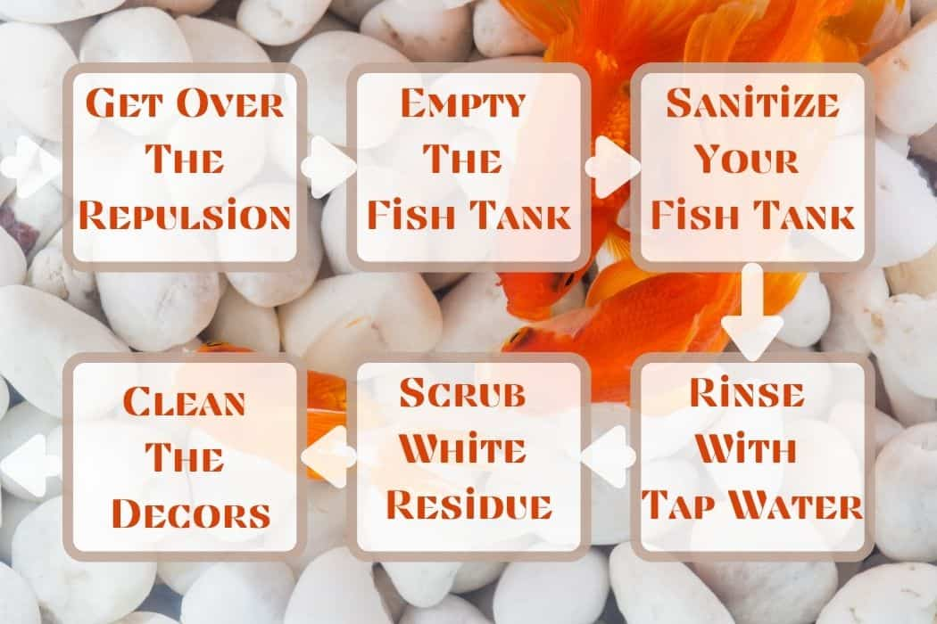 Steps For Cleaning A Used Fish Tank