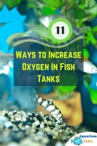 11 Ways to Increase Oxygen in Fish Tanks