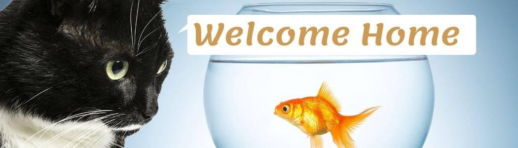 Acclimate Your Goldfish To Their Aquarium