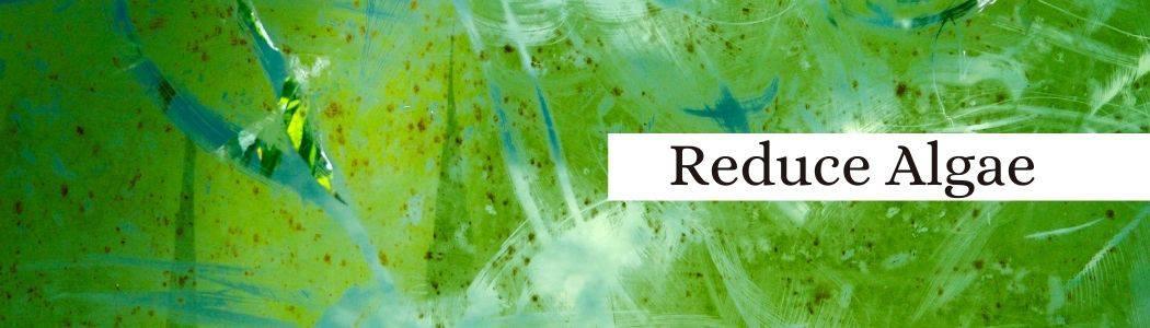 Algae to lower aquarium water pH