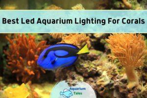 Best Led Aquarium Lighting For Corals by Aquarium Tales