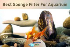 Best Sponge Filter For Aquarium by Aquarium Tales