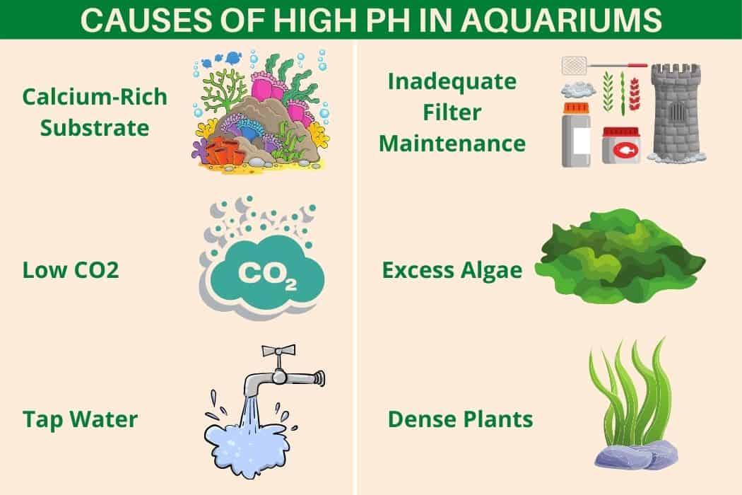 Causes Of High pH In Aquariums