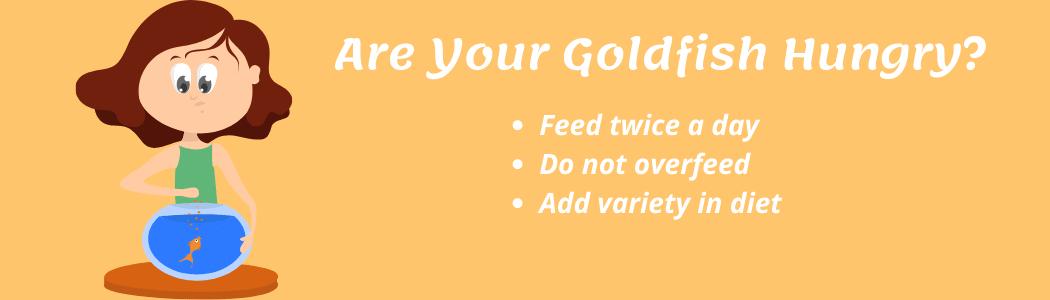 Feeding Your Goldfish Properly