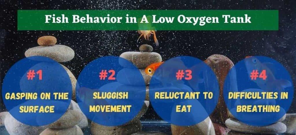 Fish Behavior in A Low Oxygen Tank