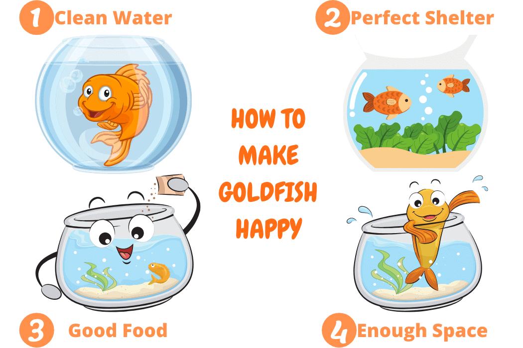 How To Make Goldfish Happy