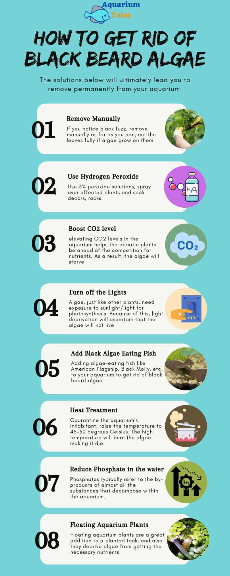 How to Get Rid of Black Beard Algae (infographic)