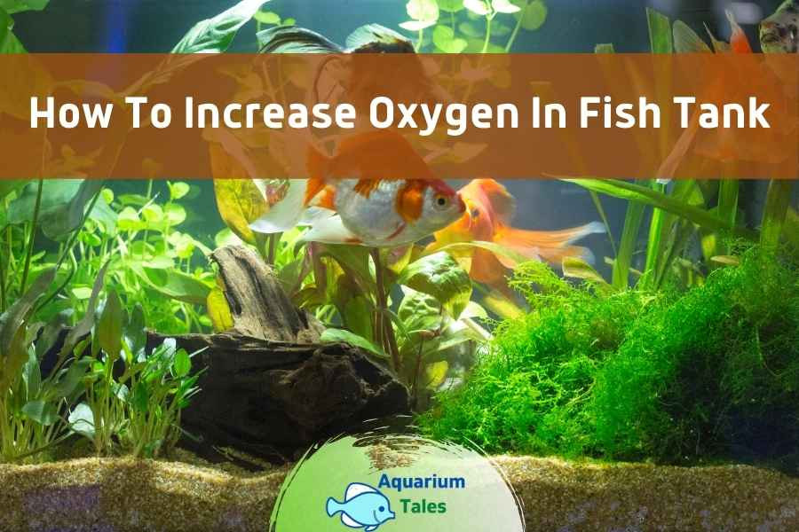 How to Increase Oxygen in Fish Tank by Aquarium Tales