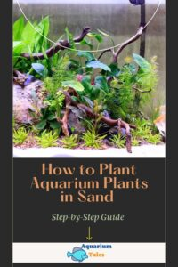 How to Plant Aquarium Plants in Sand (Step-by-Step Guide)