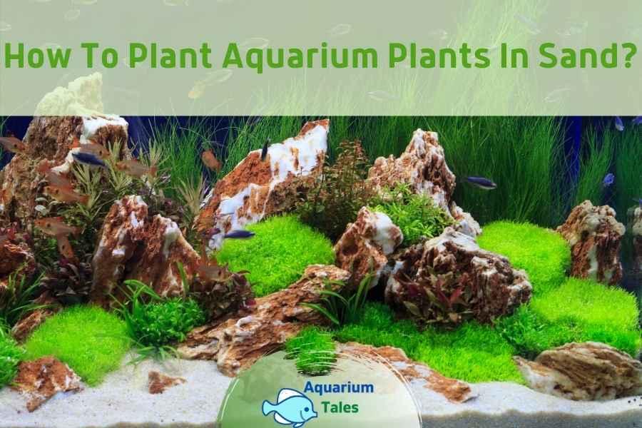 How to Plant Aquarium Plants in Sand by Aquarium Tales